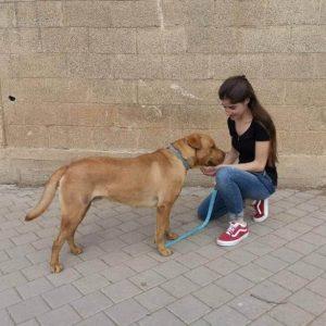 אילוף כלבים בנתניה